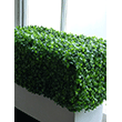 Fake It! - Artificial hedge in white window box