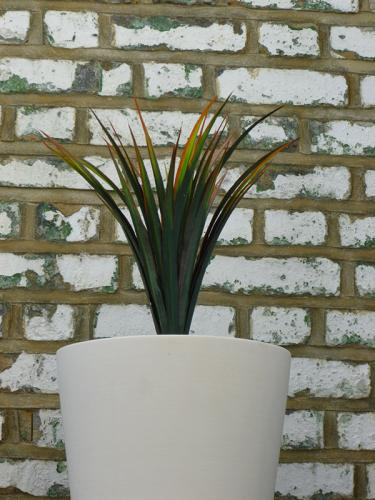 Yucca in white pot